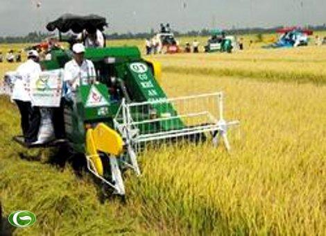 Nghị định của Chính phủ về quản lý, sử dụng đất trồng lúa